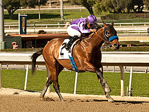 Indianapolis wins the 2014 San Pedro Stakes.