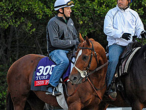 Indy Point - 2013 Breeders' Cup, October 29, 2013.