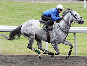 Informed Decision works towards the Breeders' Cup Oct. 25, 2010.