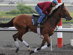 Inglorious prepares for the Woodbine Oaks.