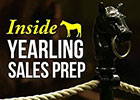 Inside Yearling Sales Prep: Foot Care