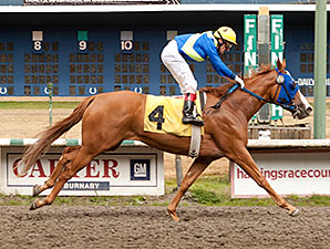 Irish Lyric wins the CTHS Sales Stakes.