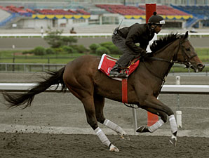 Isabeau's Ellegance at Woodbine, June 9, 2010.