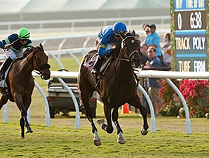 Istanford wins the 2014 Sandy Blue Handicap.