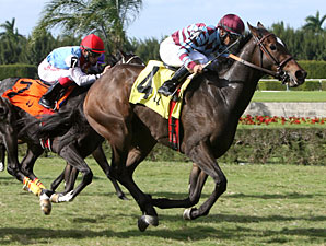 Italo wins the 2011 Arthur Appleton Juvenile Turf.