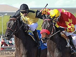 J P Rocker wins the 2014 Gene Fleming Breeders' Derby.