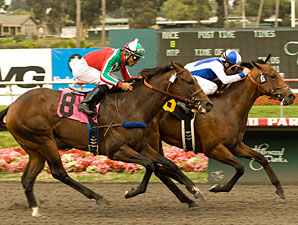 J P's Gusto wins the 2010 Hollywood Juvenile Championship.