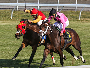 Jack Milton wins the 2013 Transylvania Stakes.