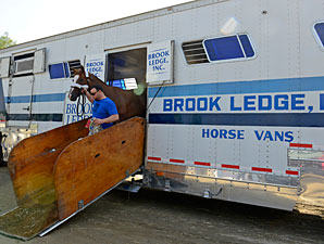 Jersey Town arrives at the 2012 Breeders' Cup.
