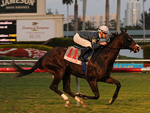 Jet Propulsion wins the 2010 Sunshine Millions Turf.