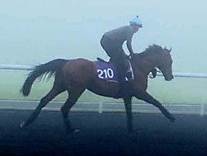 Joshua Tree (IRE) preps for the Dubai Gold Cup at Meydan for the 3/6/2014.