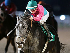 Jslookovrurshoulda wins the 2015 LA Bred Premier Night Ragin Cajun Starter Stakes.