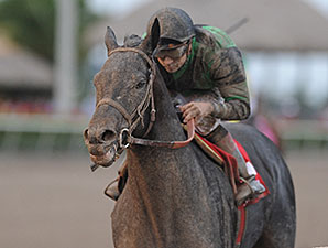 Just Call Kenny wins the 2014 Spectacular Bid Stakes.