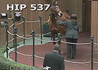 Keeneland January: Hip 537 in the Ring