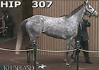 Kee Nov 2014: Hip 307, Hard Not to Like, Ring