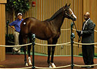Keeneland Sept Yearling Sale: Hip 228 in the Ring