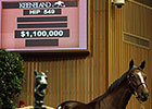 Keeneland Sept Yearling Sale: Hip 549 in the Ring