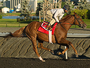 Kaigun - Woodbine, September 11, 2014.