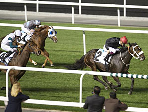 Kavanagh wins the 2013 Energia Elegante.