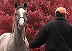 Keeneland November Sale 2014: Day 3 Recap