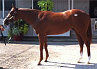 Keeneland September Sale - Hip 459 by Speightstown