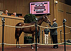 Keeneland Sept Yearling Sale: Day 4 Wrap
