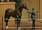 Keeneland Sept Yearling Sale: Hip 595 in the Ring