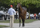 Keeneland September Sale Preview 2012