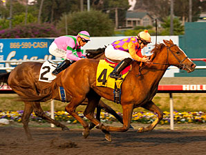 Killer Graces wins the 2011 Hollywood Starlet.