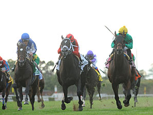 King David wins the 2012 Jamaica.