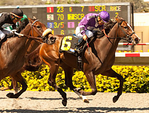 Kinz Funky Monkey Maiden Win 09/01/2012