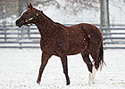 Kitten's Joy: 2013 Leading Sire