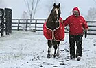 Ramsey Farm 2013: Ken Ramsey and Kitten's Joy