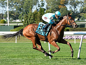 Lady Eli Profile News Entries Results Video And Blogs