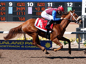 Lady Genius wins the 2013 Copper Top Futurity - Filly Division.