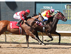 Lady Jila wins the 2013 Columbine Stakes.