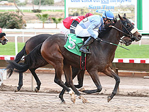 Lazy Daisy May wins the 2013 Arizona Breeders' Futurity Fillies.