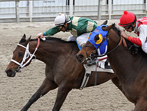 Lee's Spirit wins the 2013 Costa Rising Stakes.