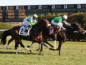 Lentenor finishes 2nd on November 28 on the turf at Aqueduct.