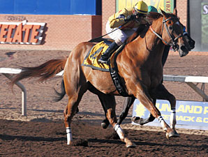 Lester's Echo wins the 2013 Mt. Cristo Rey Handicap.