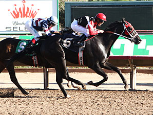 Lewiston wins the 2012 ATBA Fall Sales Stakes.