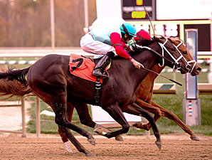 Lighthouse Bay wins the 2012 Smart Halo.
