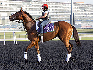 Little Mike's first visit to the track at Meydan.