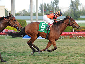 Little Mike wins the 2012 FL Sunshine Millions Turf.