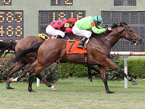Look At the Time wins the 2013 John Franks Memorial Stakes.