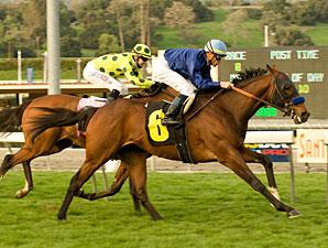 Loup Breton wins the 2010 San Marcos Stakes.