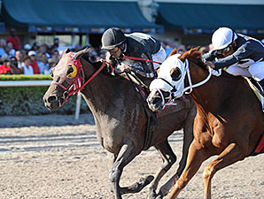 Loverbil wins the 2014 Express Stakes.