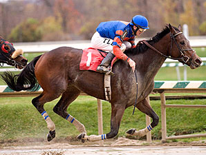 Love's Blush wins the 2009 All Brandy Stakes.