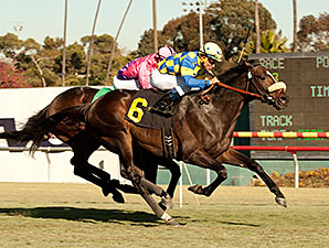 Lucayan wins the 2013 Hollywood Turf Cup.