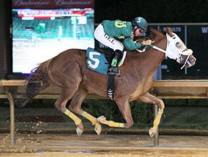 Lucy's Bob Boy wins the 2013 Wild and Wonderful Stakes.